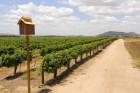 Wild Women of Wine Country Family 5K walk/run through the Vineyards