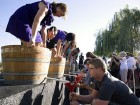 Grape Stomp Festival Tickets Now on Sale!