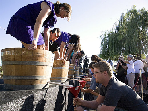 Grape Stomp Festival Tickets Now On Sale Ponte Winery Blog