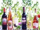 New Wine Flights for Spring