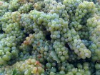 It's Time to Love Chardonnay Again