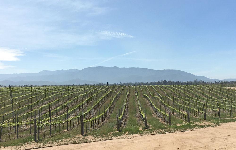 spring-Ponte-vineyards
